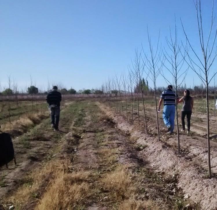 Taller Política y Gestión Territorial Rural en el Sistema Agroalimentario Regional