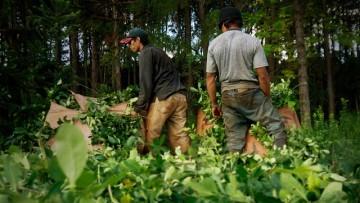 Millcayac convoca al dossier sobre Juventudes y Ruralidades en Latinoamérica